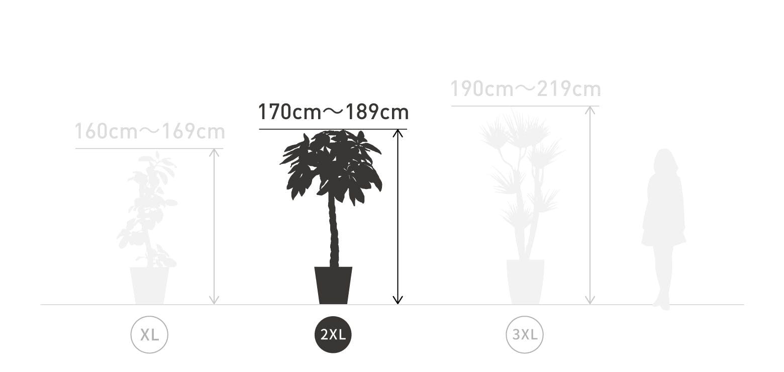 サイズ目安 2XL 170〜189cm