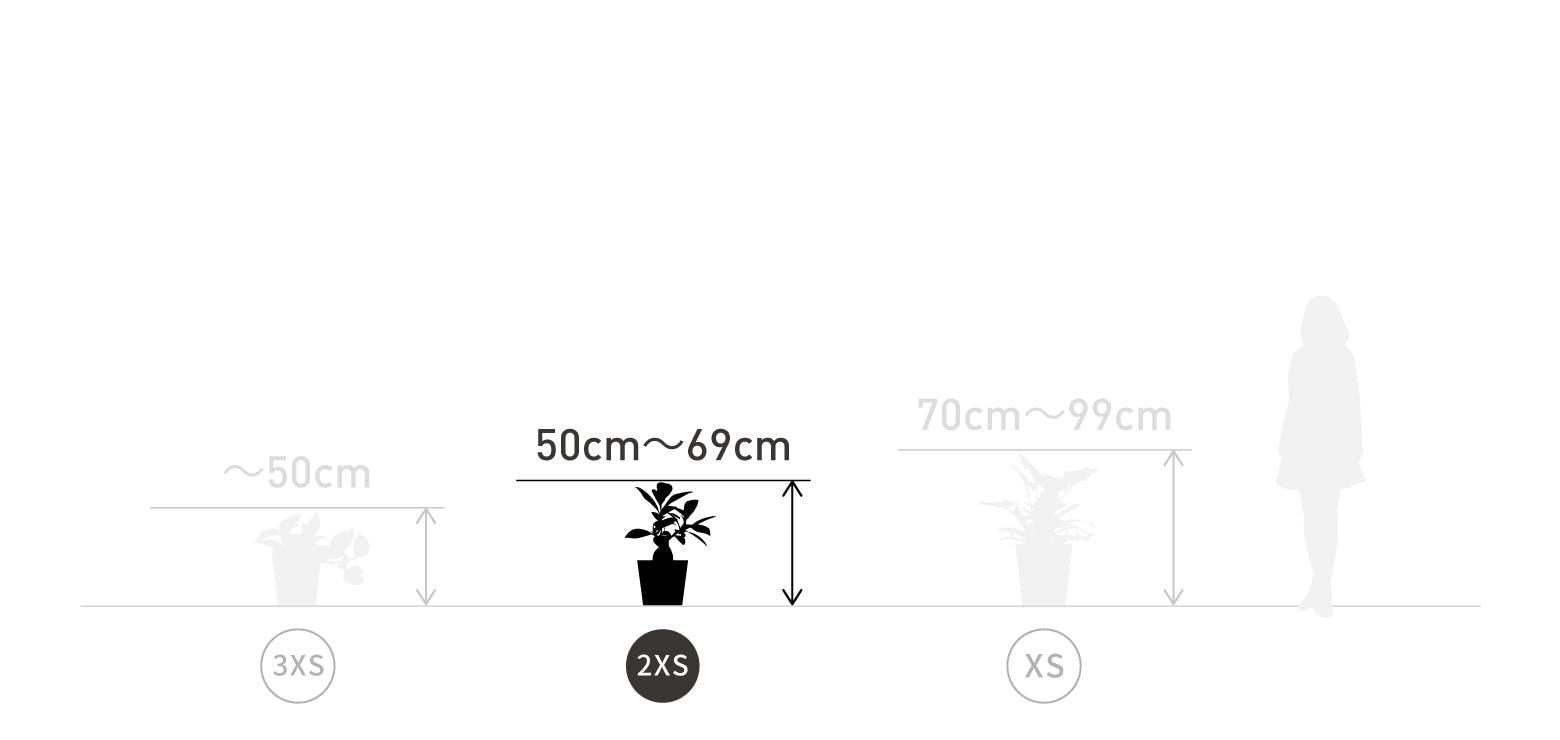 サイズ目安 2XS 50〜69cm