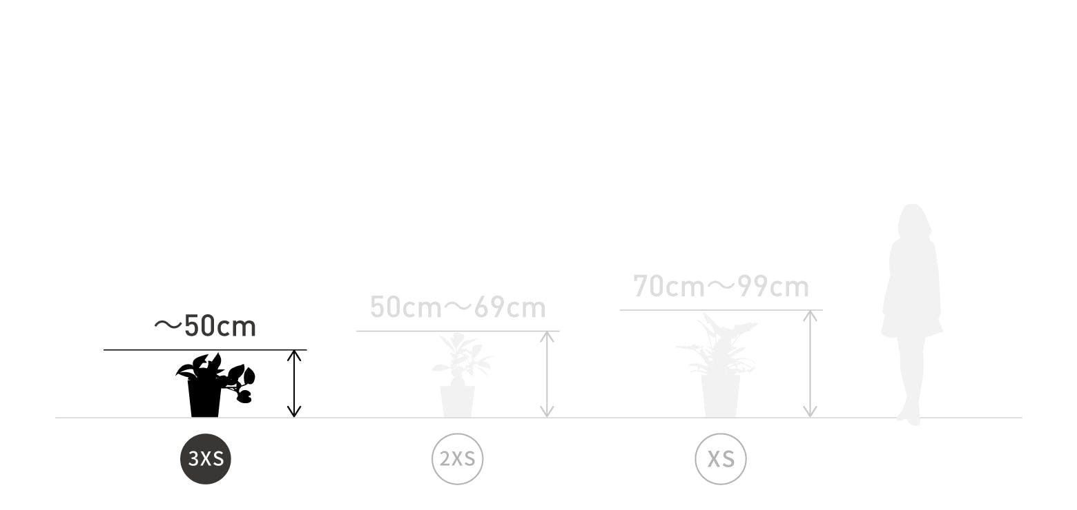 サイズ目安 3XS 〜50cm