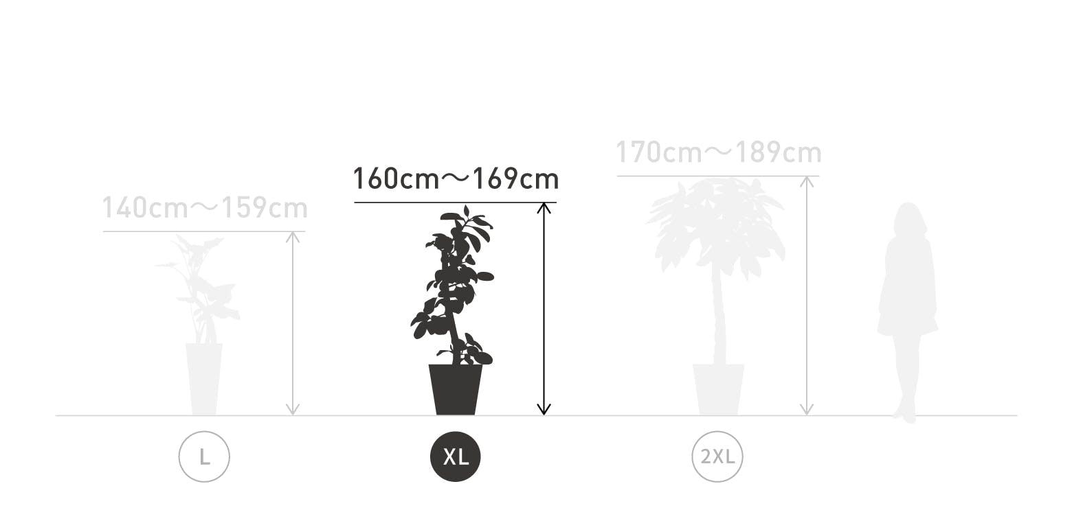 サイズ目安 XL 160〜169cm