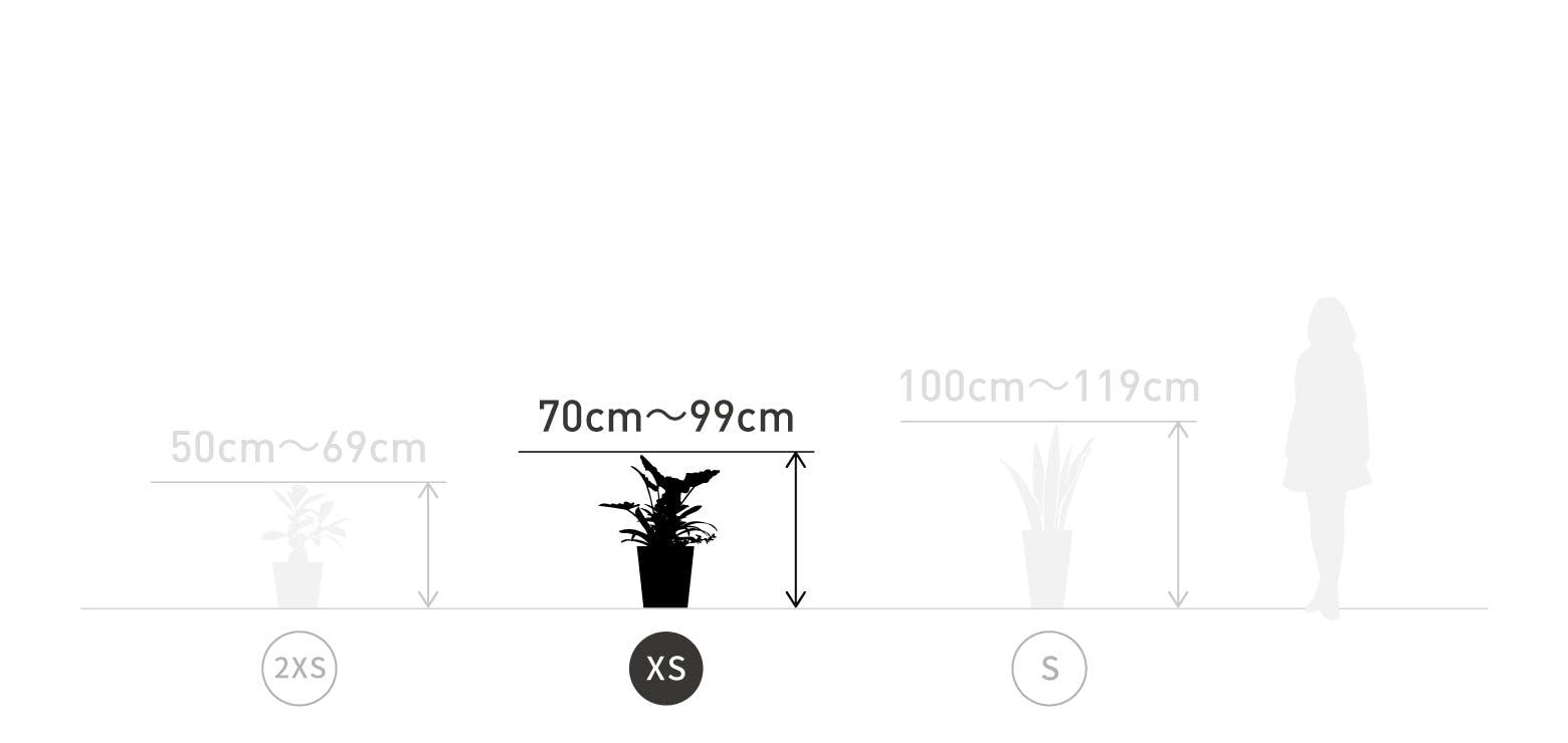 サイズ目安 XS 70〜99cm