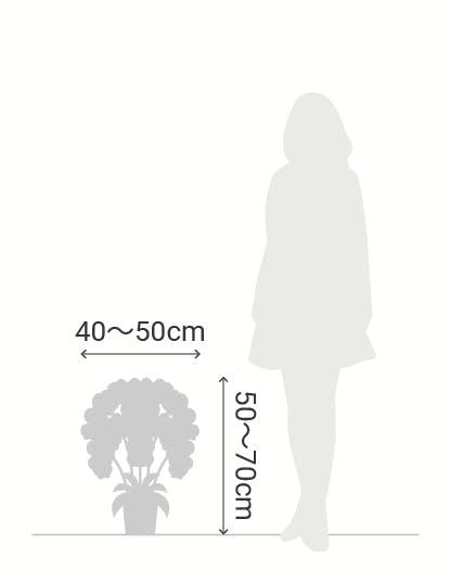 サイズ目安 縦50〜70cm 横40〜50cm