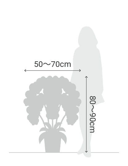サイズ目安 縦80〜90cm 横50〜70cm
