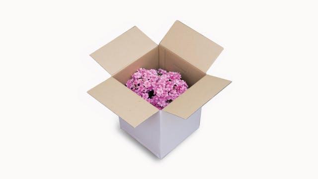 花専用ボックスでお届け